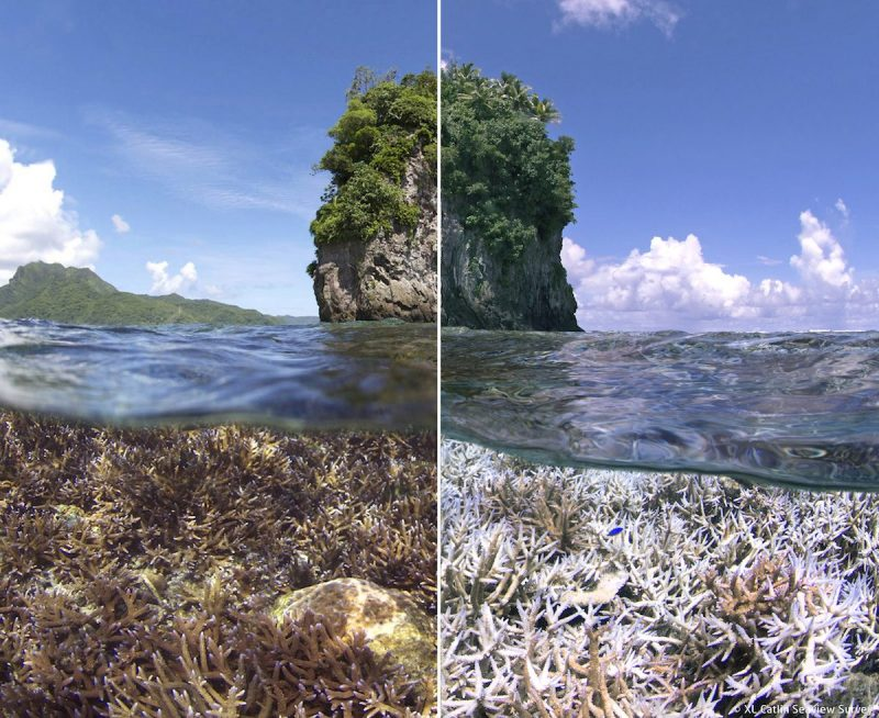 coral before bleaching to left, coral bleached right