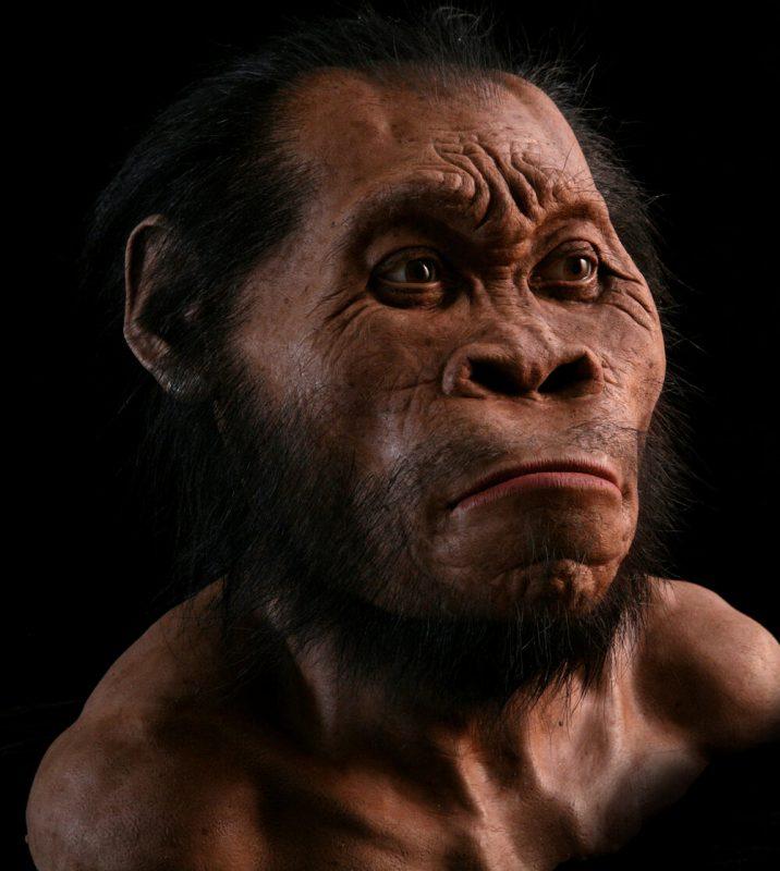 Reconstruction of Homo naledi - by John Gurche