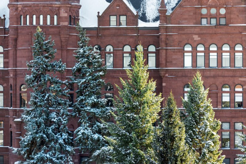 Pine trees with snow in front of Crouse College