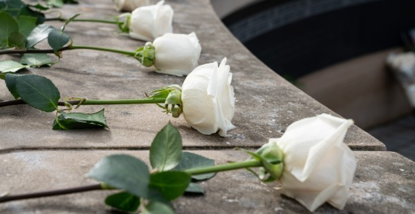 Four white roses laying in a row receding away from the viewer on a curved stone wall