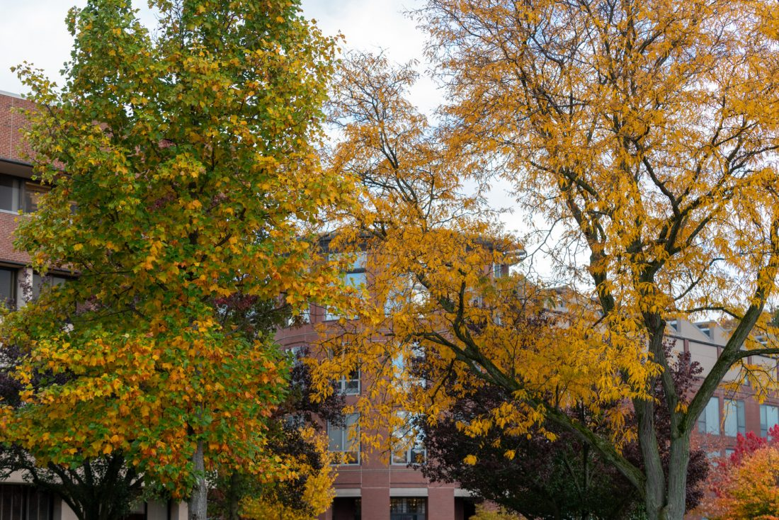 Fall foliage in front of Shaffer Art Building.