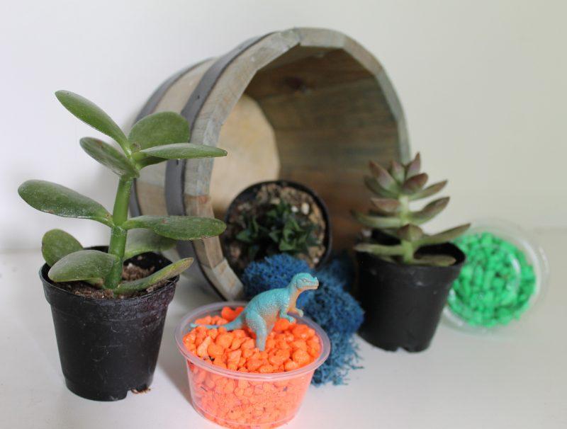 A display of succulents and terrarium rocks.