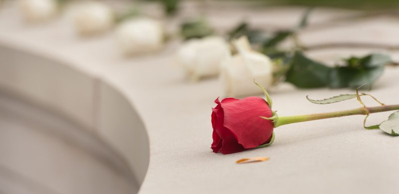 A row of roses laid out, the first one is red and the rest are white