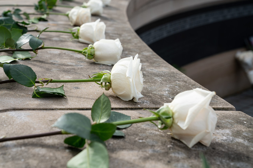 Six white roses with long stems laying on a stone wall in a semi circle